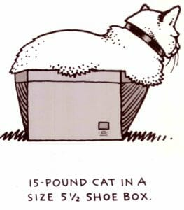 stress is a big cat in a small box
