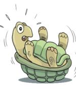turtle back trans logo